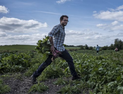 When fine dining stops by the farm. An interview with Christian Puglisi